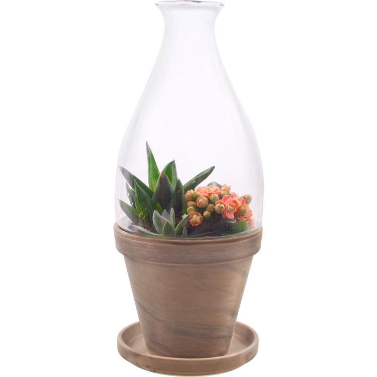 Basalt Flower Pots : Quot vidro glass terrarium with basalt pot and saucer in