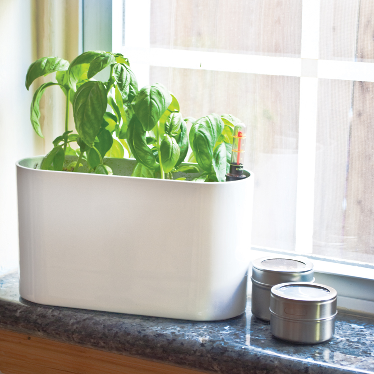 Fresh Foodie 10 In Basil Herb Kit Pride Garden Products